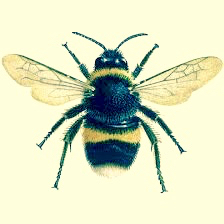 A Bee, 8 January, 2009