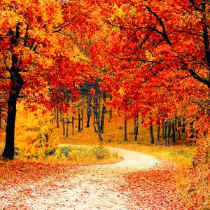 Hiking, and Bye Bye Fall